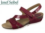 Seibel Hailey 33 81533 62 450 hibiscus