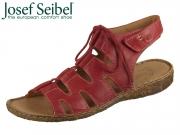 Seibel Rosalie 39 79539 95 450 hibiscus