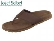 Seibel Charles 01 44701 869 310 brasil bear