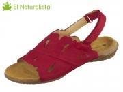 El Naturalista Wakataua N5068 tibet tibet Pleasant