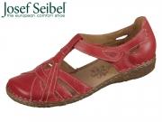 Seibel Rosalie 29 79529 95 450 hibiscus